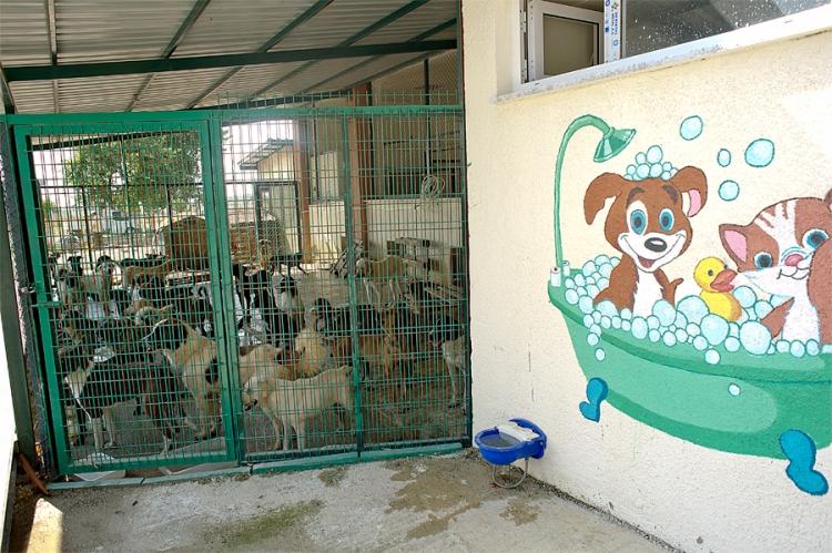 Manavgat Barınağı Köpekleri