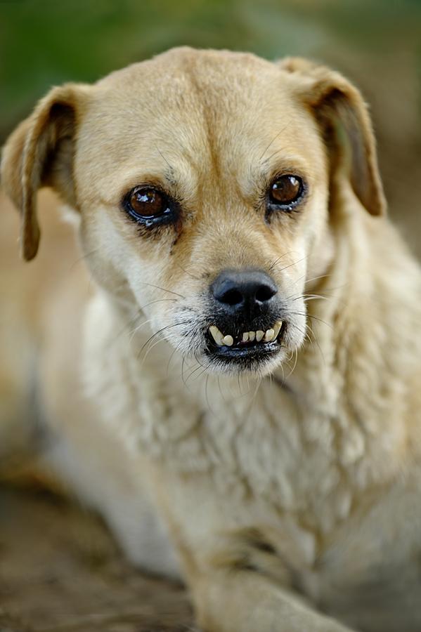 Sahiplenmeyi Bekleyen bir köpek