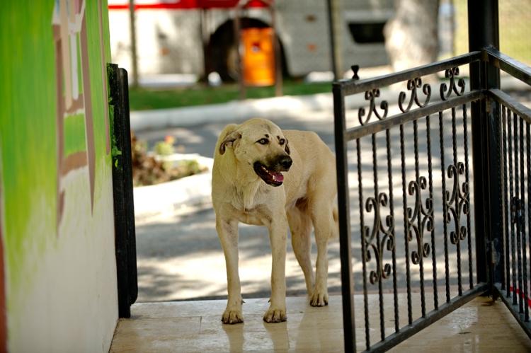 Manavgat Hayvan Barınağında Sahiplenmeyi bekleyen bir köpek